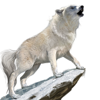 Tundra Wolf.png - Wolf PNG