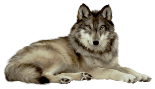 Wolf PNG - 21424