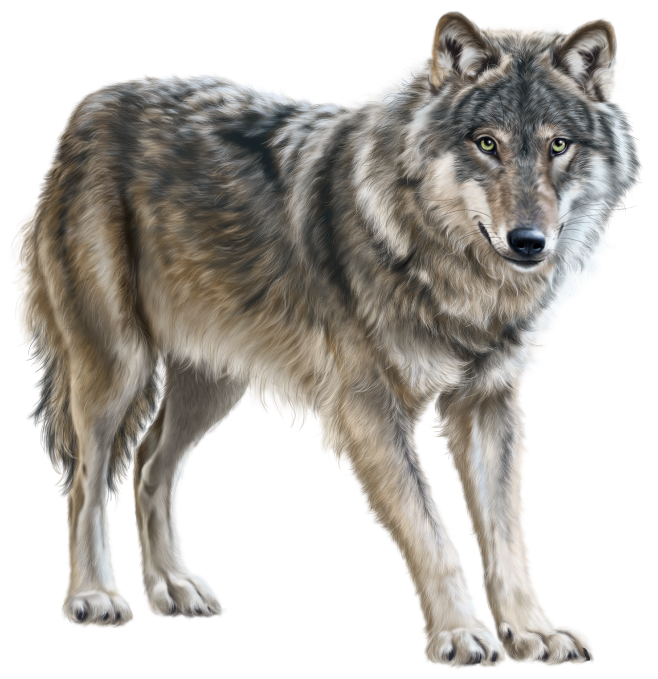 Wolf PNG - 21423