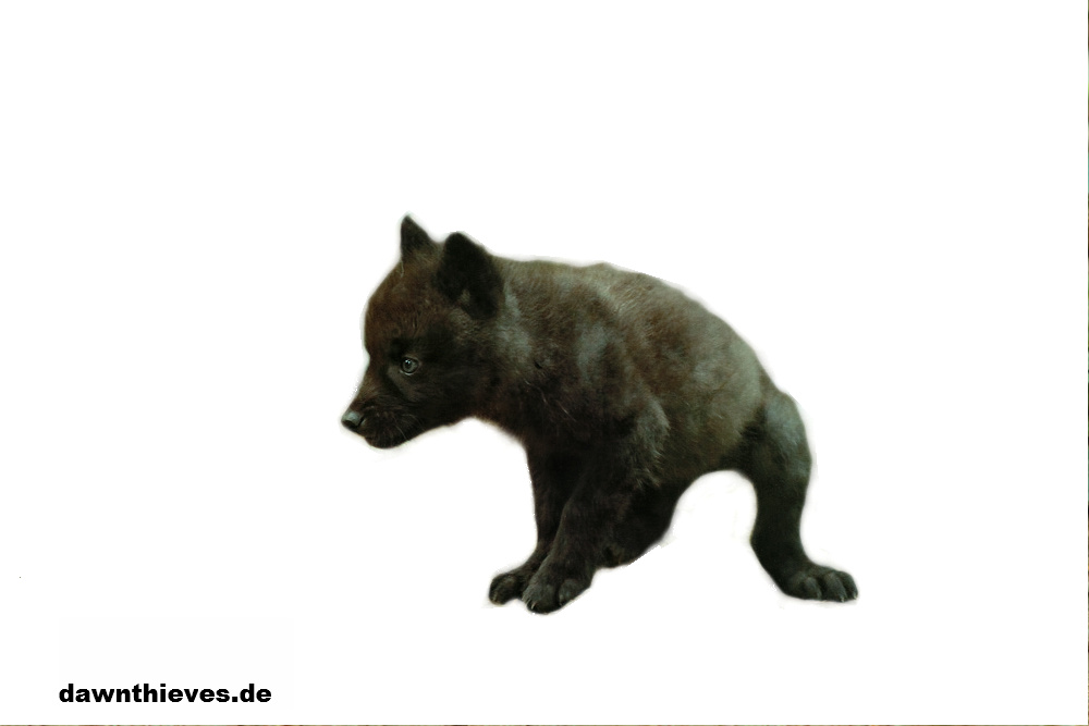 Free black wolf pup cut out by Dawnthievescutouts PlusPng.com  - Wolf Pup PNG