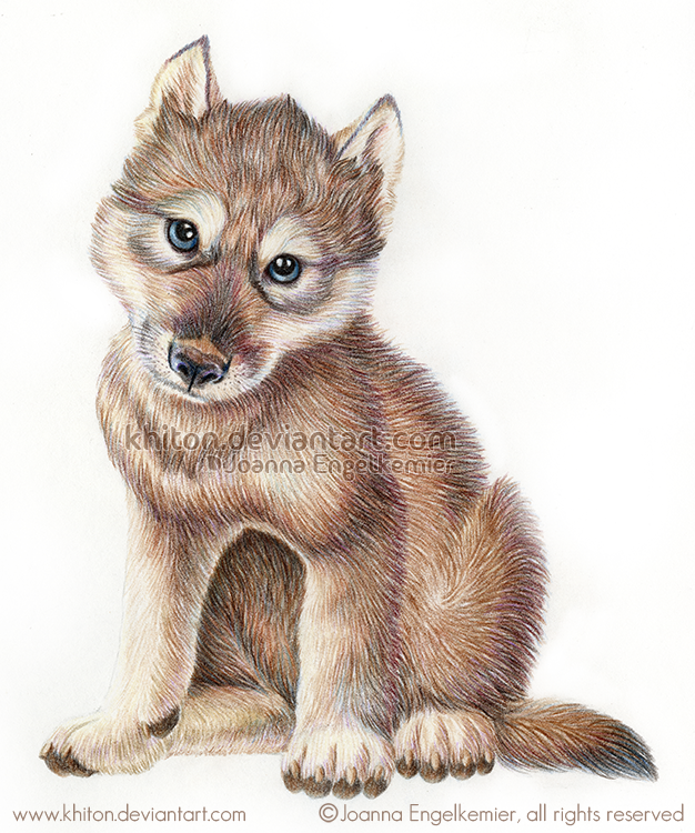 Wolf Pup by khiton PlusPng.com  - Wolf Pup PNG
