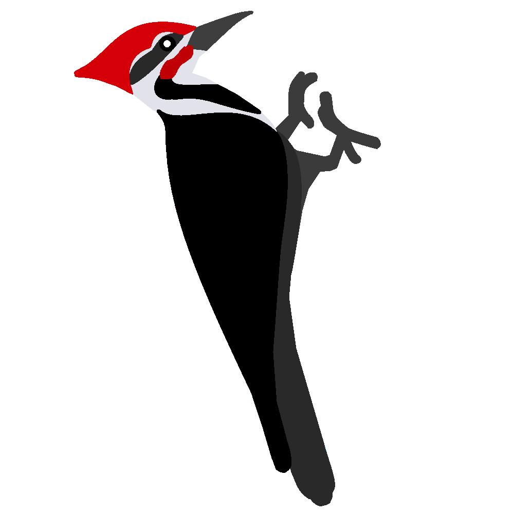 Woodpecker Bird Clip Art - Woodpecker PNG