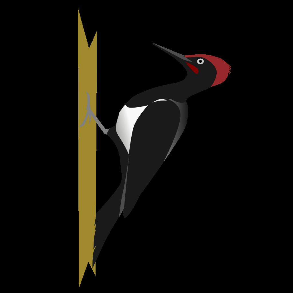 Woodpecker svg #12, Download drawings - Woodpecker PNG