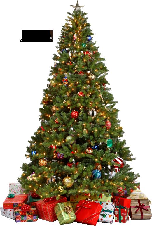 X Mas Tree PNG - 46376