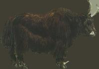 . PlusPng.com animals/ mammals/ bovines/ yak.png - Yak Animal PNG
