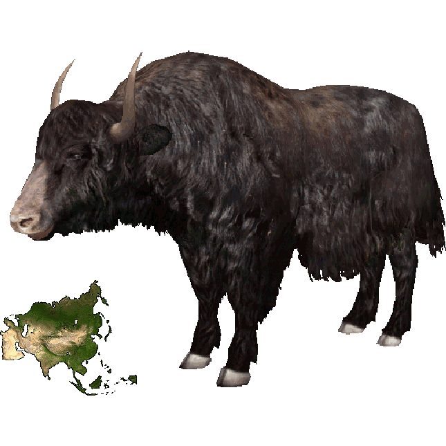 Image - Wild Yak (Dutch Designs).png | ZT2 Download Library Wiki | FANDOM  powered by Wikia - Yak Animal PNG