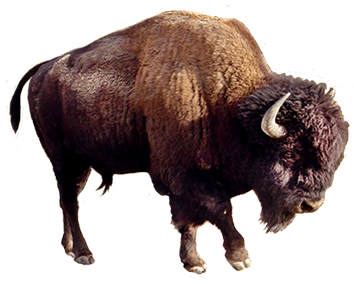 picture of brown bear clip art, bison clipart - Yak Animal PNG