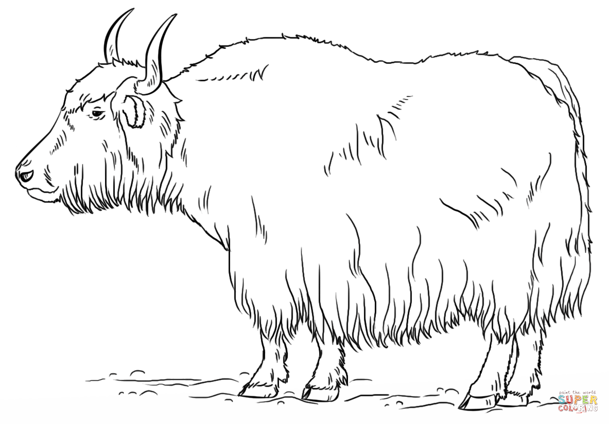 Click the Yak coloring PlusPng.com  - Yak PNG Black And White