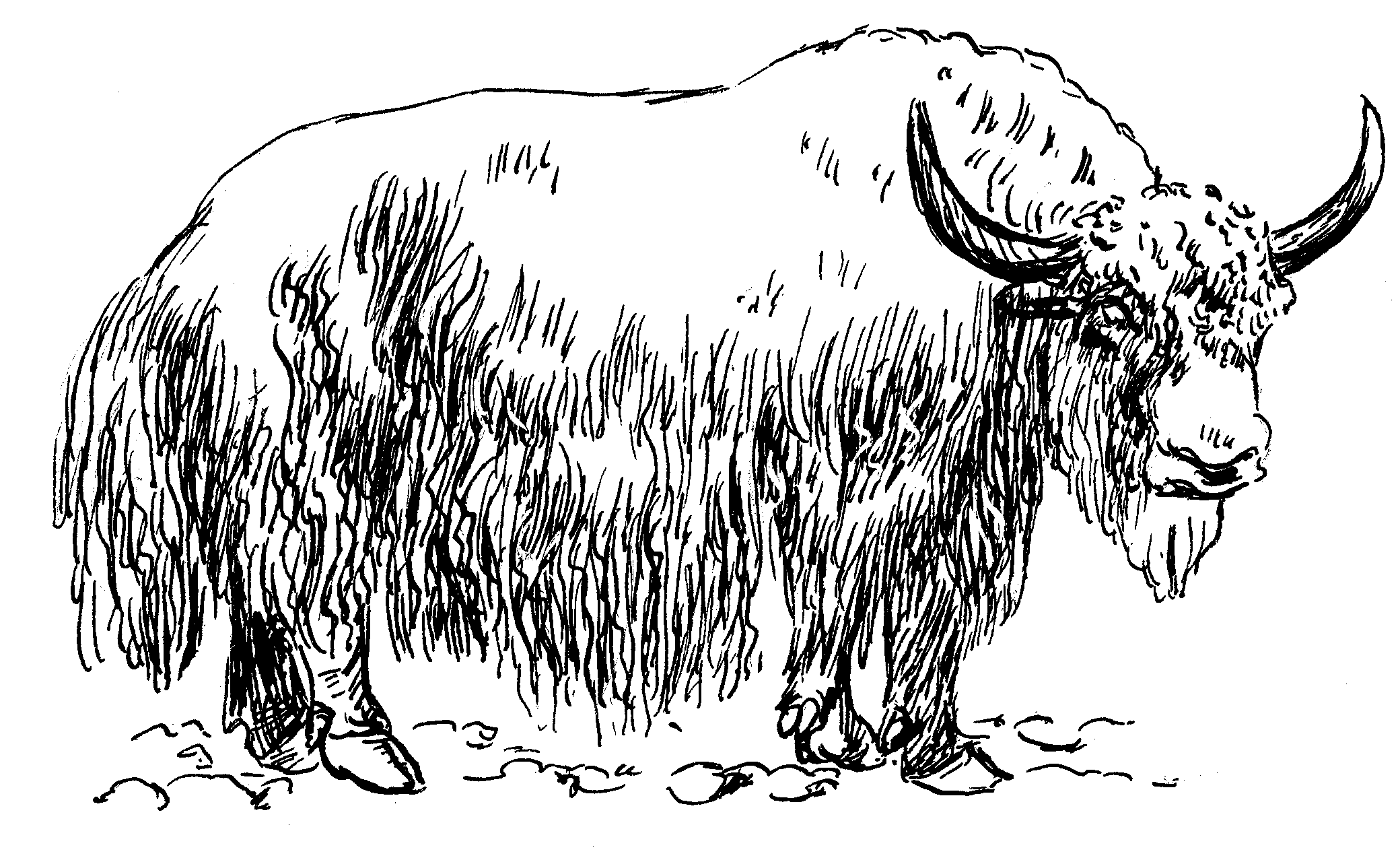 File:Yak (PSF).png - Yak PNG Black And White