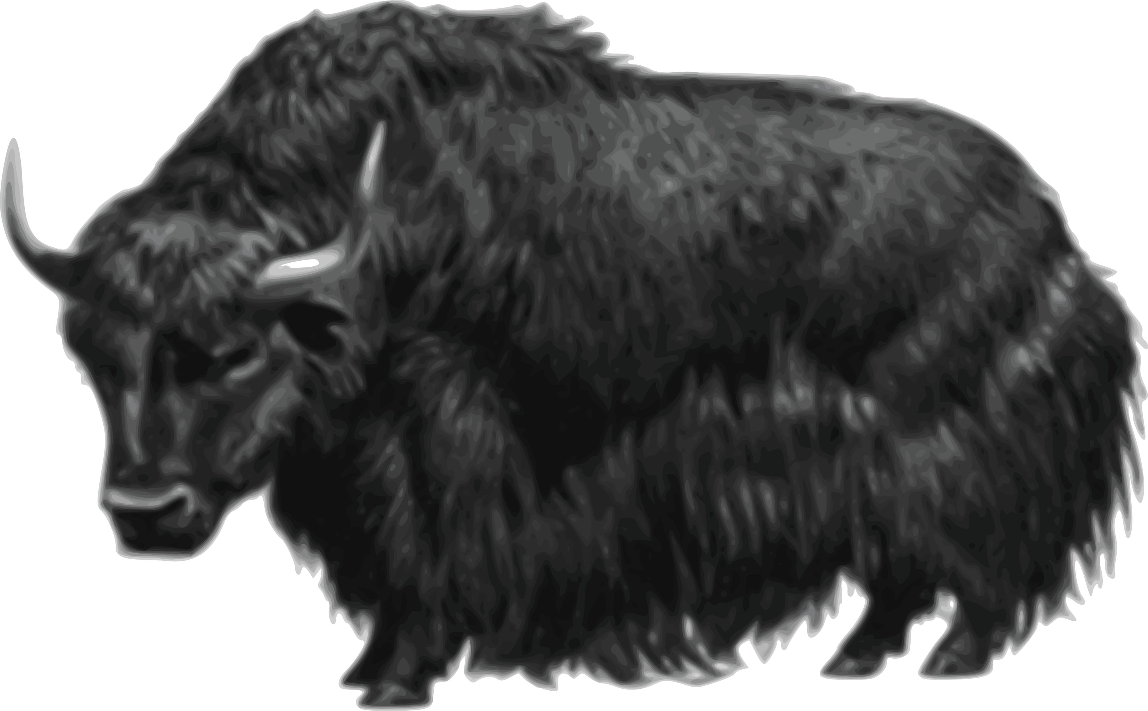 Free Clipart Of A black yak #00011545 . - Yak PNG Black And White