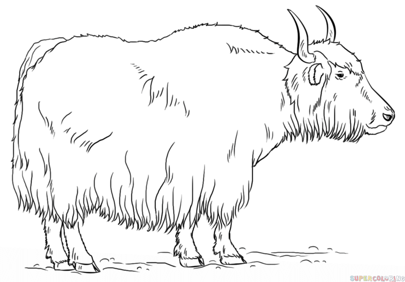 How to draw a yak - Yak PNG Black And White