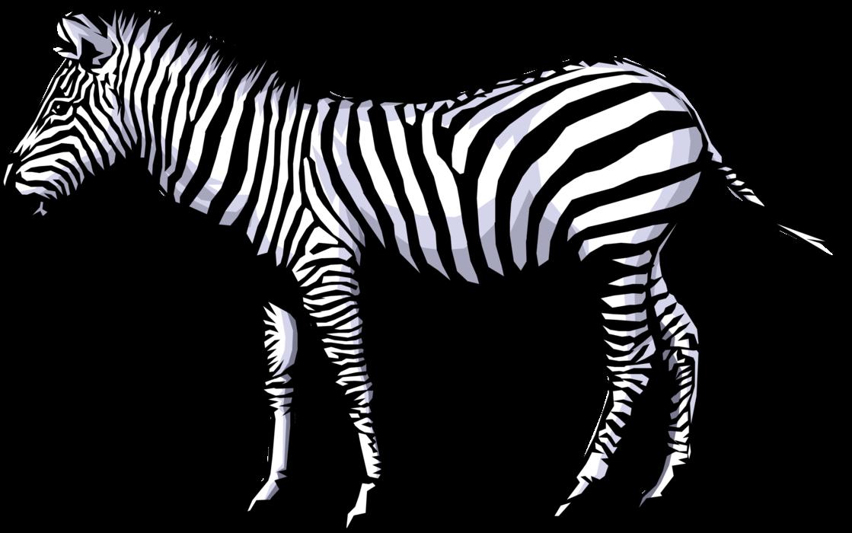 Vector Illustration of Striped African Equid Zebra Horse - Zebra HD PNG