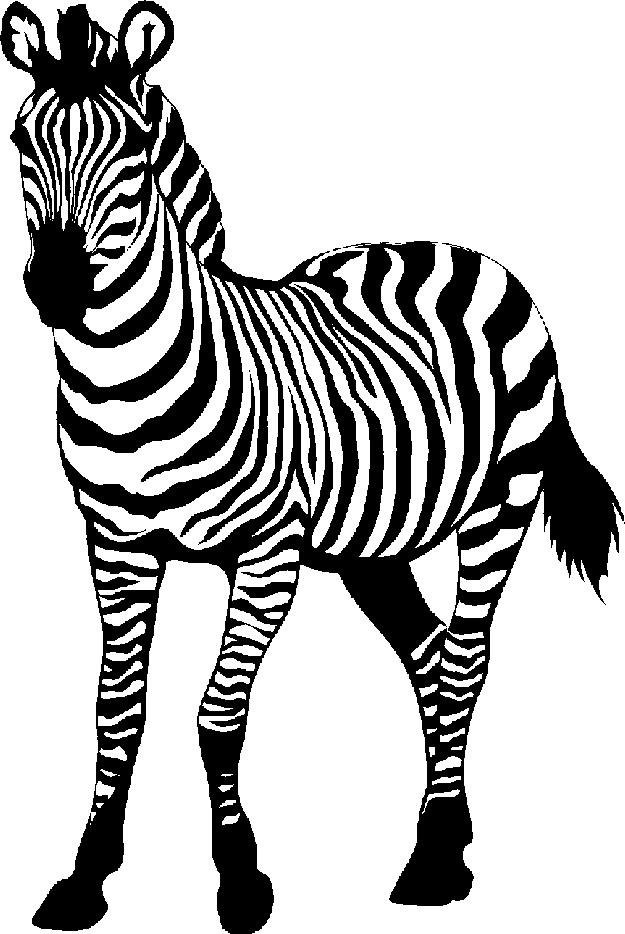 Zebra Clip Art Black And White - Zebra HD PNG