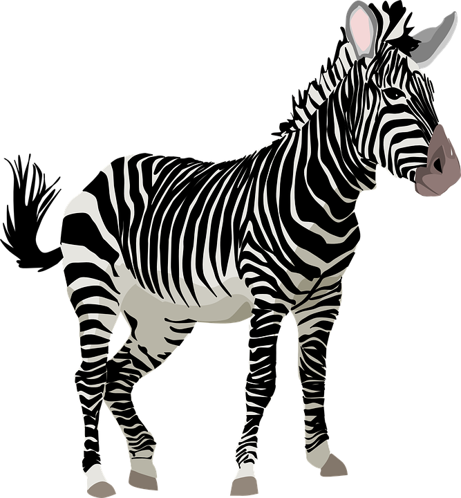 Zebra Africa Animal Safari Zoo Wildlife Ze - Zebra PNG HD
