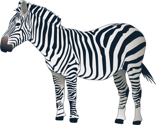 Zebra PNG image - Zebra PNG - Zebra PNG HD