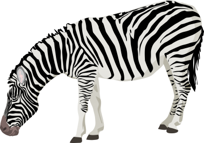 Zebra PNG Photos - Zebra PNG HD