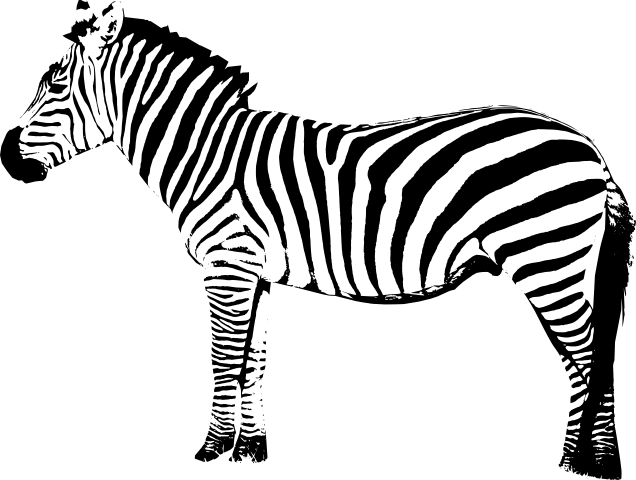 Zebra PNG - 21993