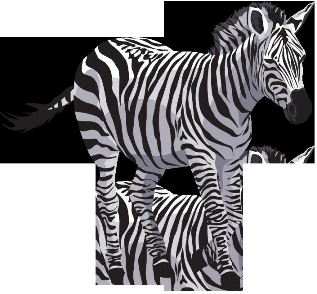Zebra PNG - 21984