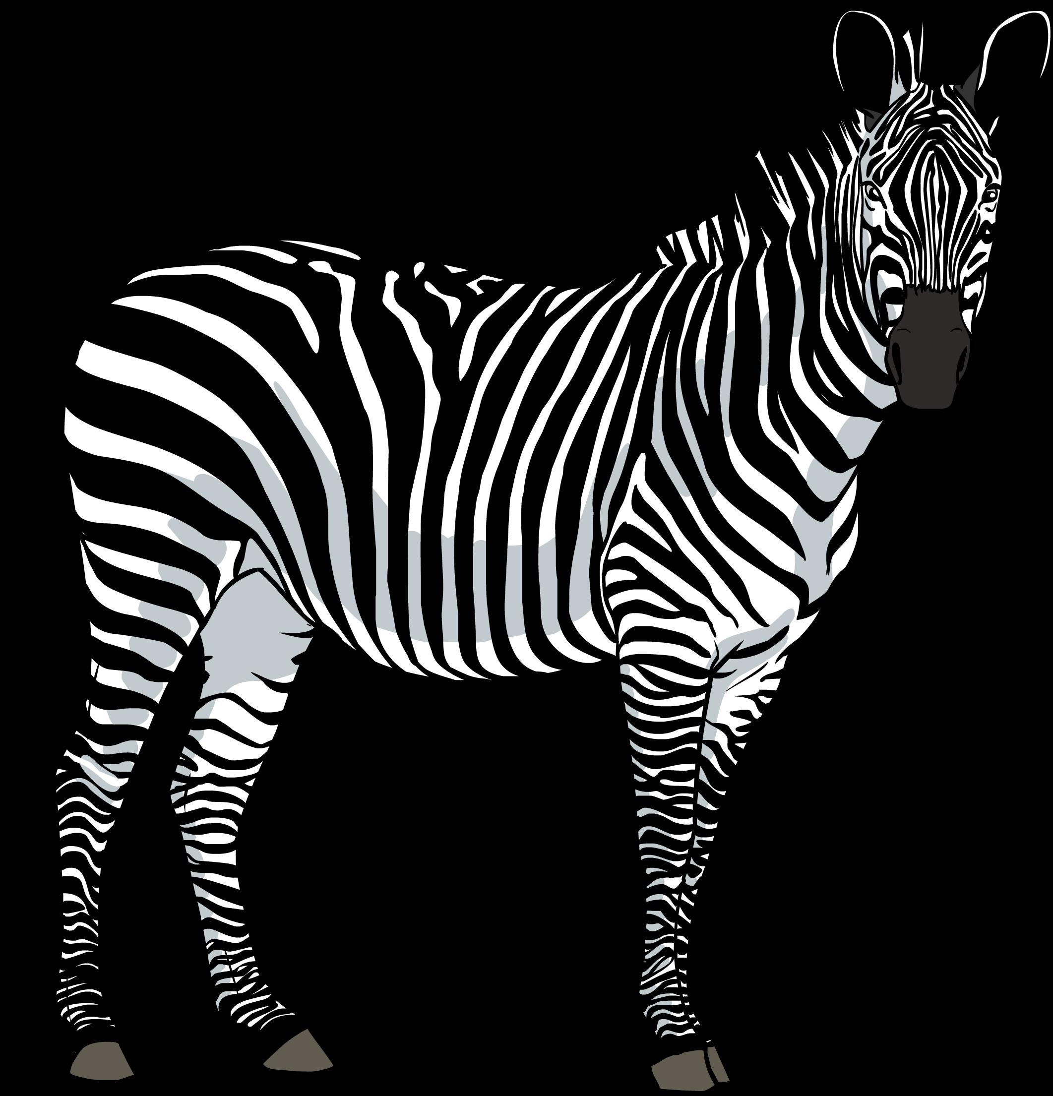 Zebra PNG - 21992