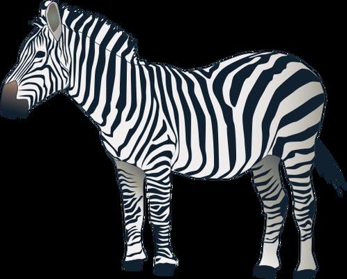 Zebra PNG - 21983